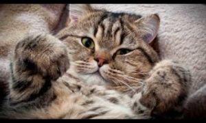 Можно ли вылизываться коту после кастрации
