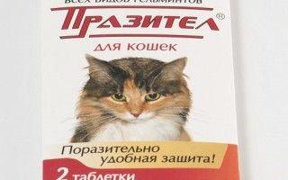Как правильно вывести вшей у кота в домашних условиях. Способы передачи паразитов: прыгают ли вши?