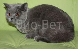 Цистостомия мочевого пузыря у кота