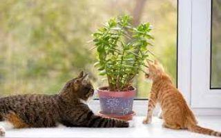 Взаимозависимость растений и животных