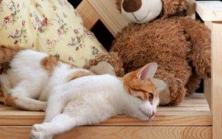 У кошки опухла лапа, в чем причина?