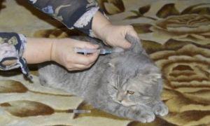 Как вводить раствор Рингера кошке