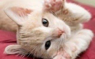 Почему кошка топчет вас лапками Мы нашли ответ